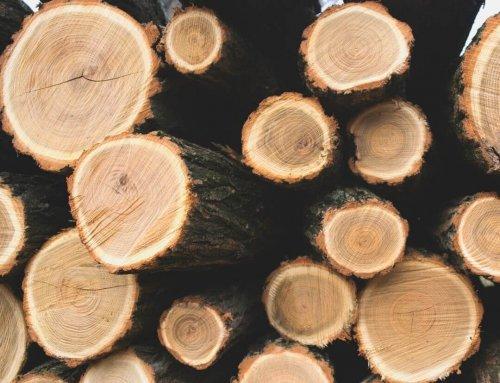 Warum mit Holz bauen? – Die 4 wichtigsten Gründe