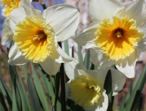 Wir wünschen euch allen frohe und gesegnete Ostern!